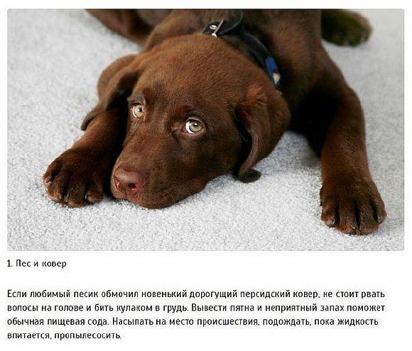 10 Лайфхак, які повинен знати кожен власник собаки