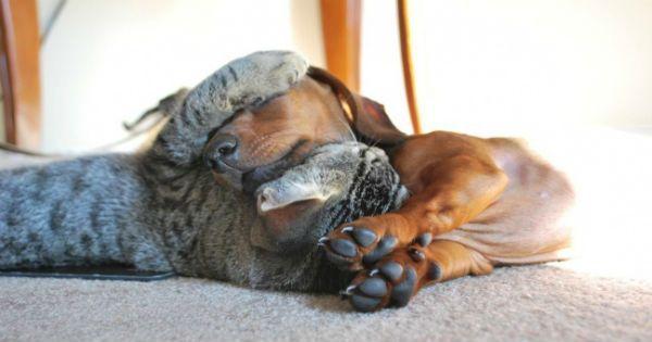 20 Котов, які по вуха закохався в собак