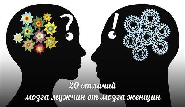 20 Відмінностей мозку жінок від мозку чоловіків