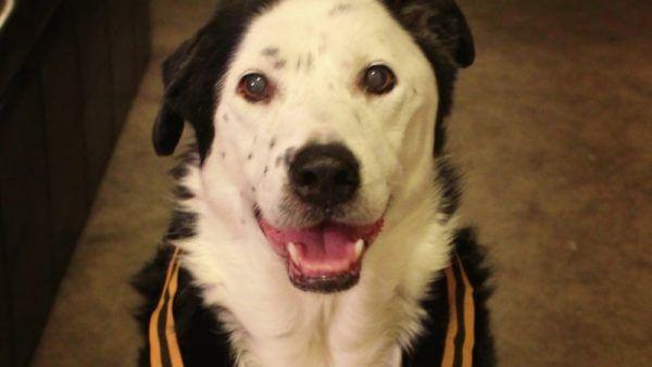Щоб врятувати пацієнта від смерті лікар порадив йому взяти собаку. Історія порятунку двох доль