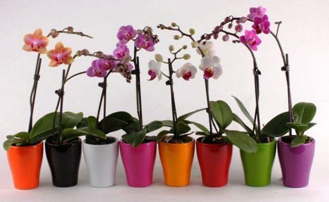 як доглядати за квітами орхідеї