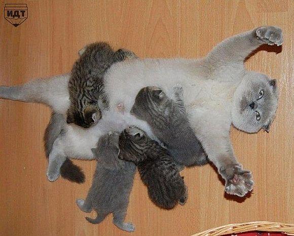 Задоволені сімейним життям кішки з маленькими кошенятами