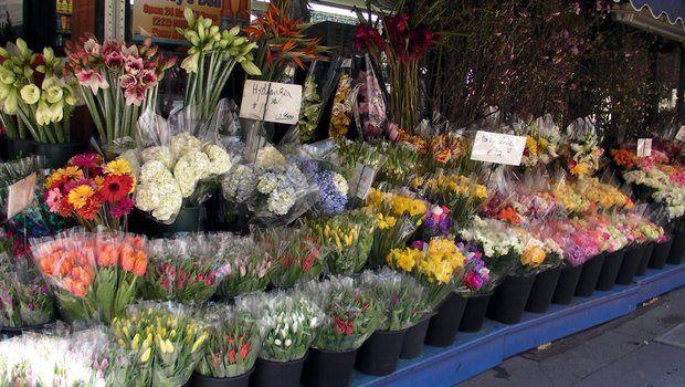 Де краще купувати кімнатні рослини