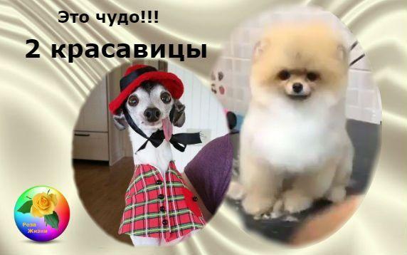 Ці 2 собаки викличуть у вас сльози розчулення !!! Дивіться відео і фото!