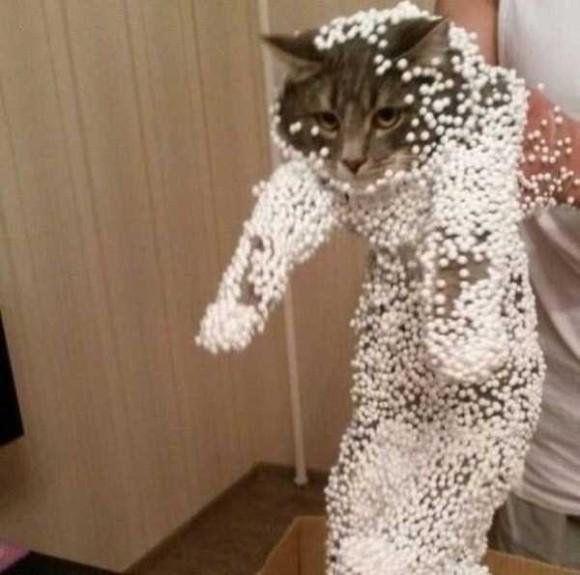Ці смішні кошки !!!