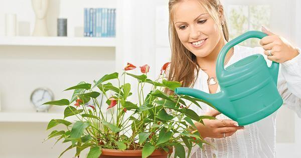 twoje-mieszkanie-kto-podleje-kwiaty_20893469