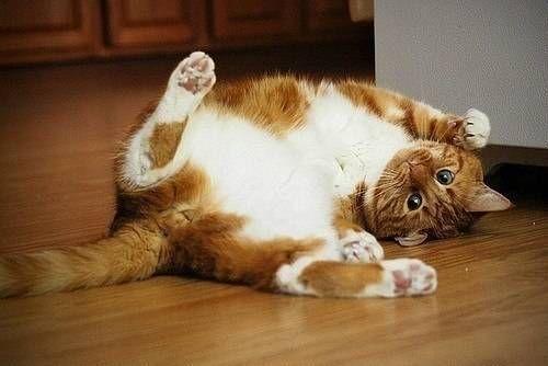 Як зрозуміти свою кішку?