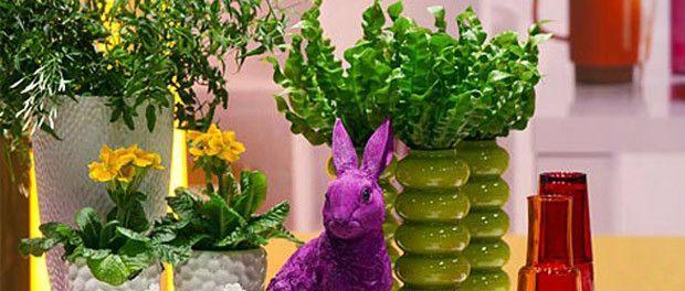 Кімнатні квіти для вашого будинку. Вибираємо рослини по знаку зодіаку