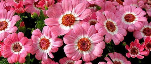 кімнатні квіти для будинку