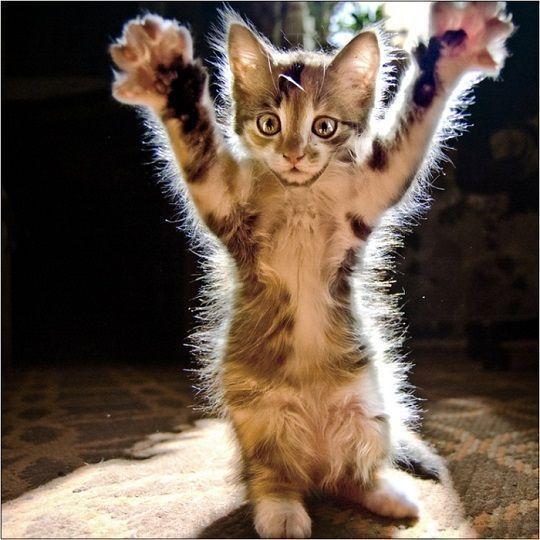 А ви знаєте чому кішці дали таку назву?