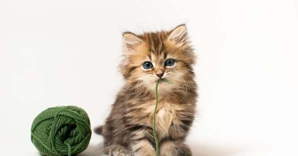 Кішка - це магічна тварина