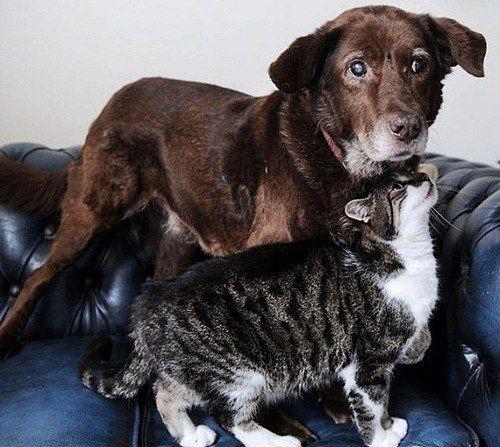 Кішка стала поводирем для сліпого пса. Чули про таке?