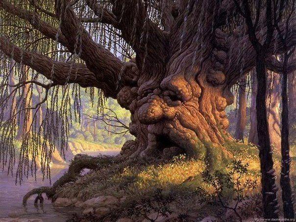 Лікування за допомогою енергії дерев