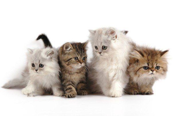 Лікуємося кішками
