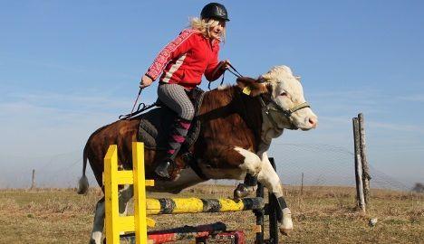 «Не купили скакового коня - приручили корову!» - подумала 15-річна німкеня регина майер.сказано - зроблено!