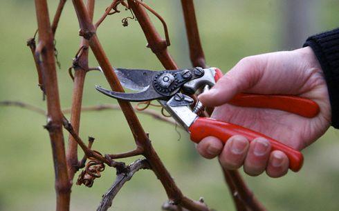 Листопад: роботи в плодовому саду, квітниках і городі
