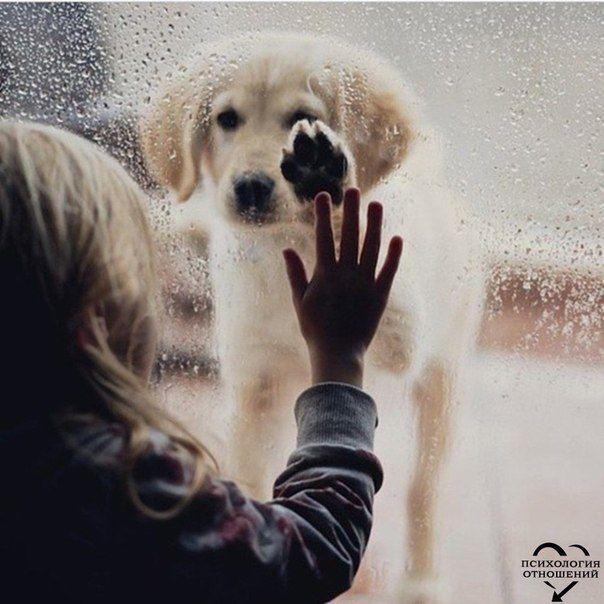 Обов`язково прочитайте і задумайтеся 10 життєвих уроків від вашої собаки