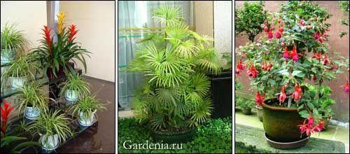 Помилки догляду за кімнатними рослинами