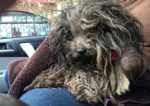 Від доходяги до щасливого пса! 15 фото собак до і після чудесного порятунку