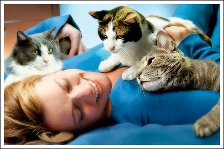 Чому кішка лягає на хворе місце людини