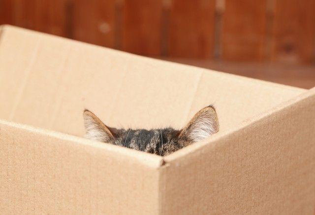 Чому кішки так люблять коробки? Відповідь знайдений!