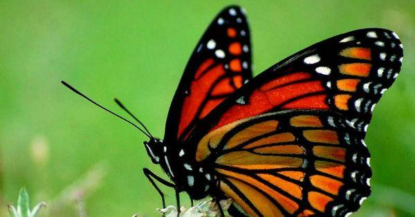 Народження метелики! Унікальне відео