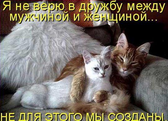 68886060_druzhba_mezhdu_m_i_zhUVEL