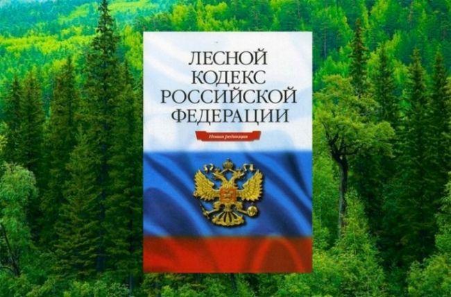 Стаття 75. Договір купівлі-продажу лісових насаджень