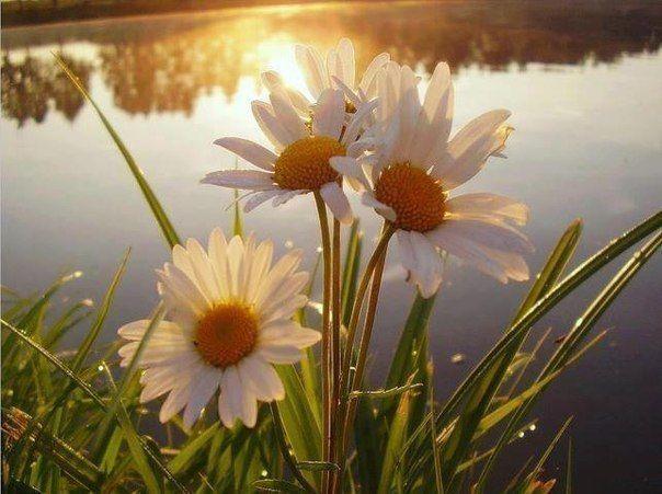Трави-талісмани для залучення любові, грошей і удачі