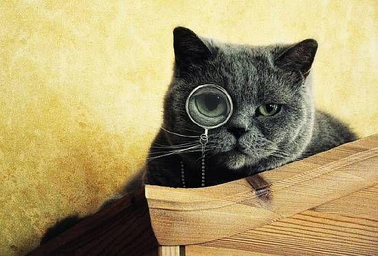 розумний-кіт-4