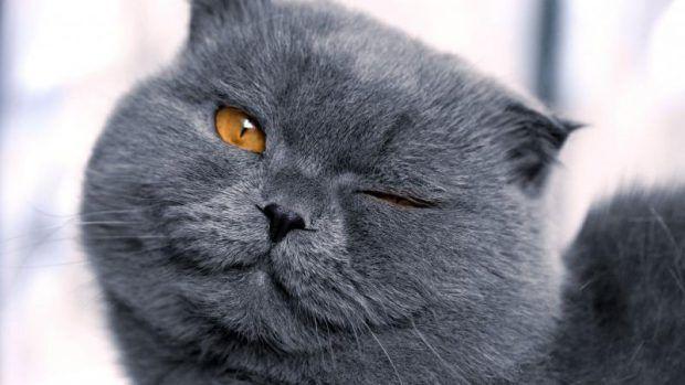 Вчені довели, як кішки маніпулюють нами
