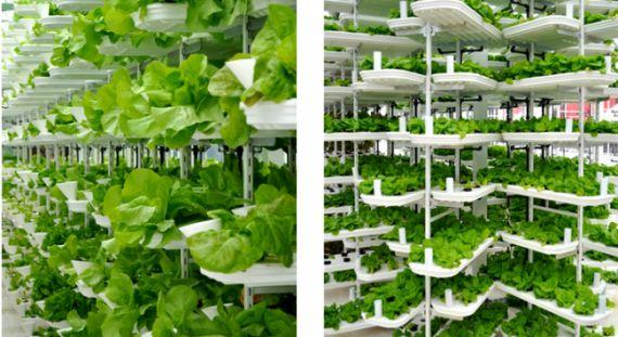 Блог ім. rodovid: Вертикальні сади. Вертикальні ферми.