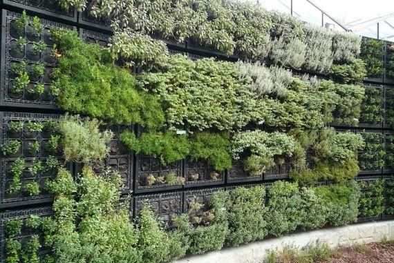 Вертикальні сади. Вертикальні ферми