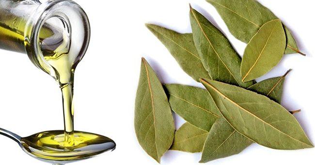 Чудо-засіб від ста хвороб: неймовірні властивості лаврового масла